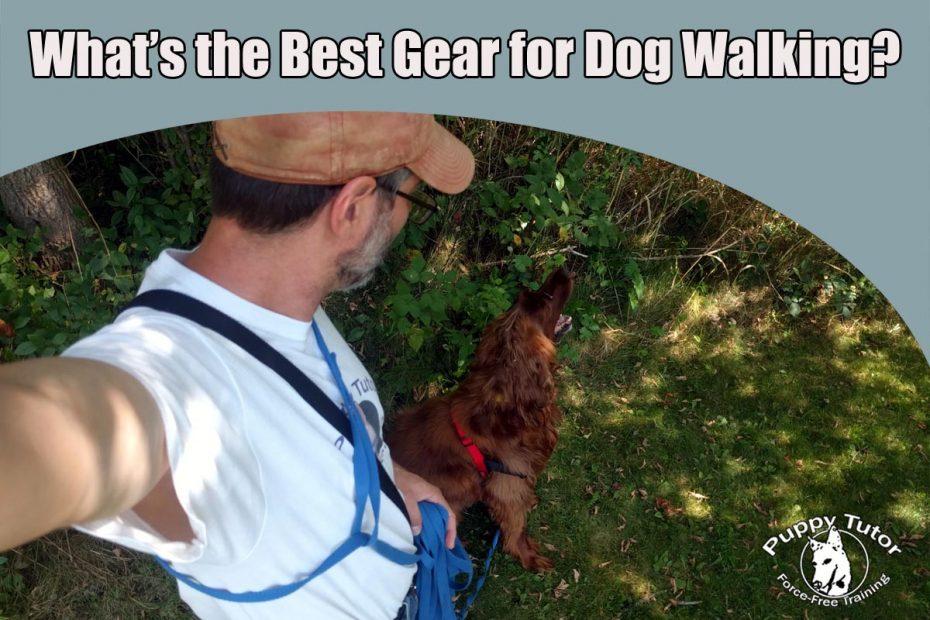 Best dog walking gear