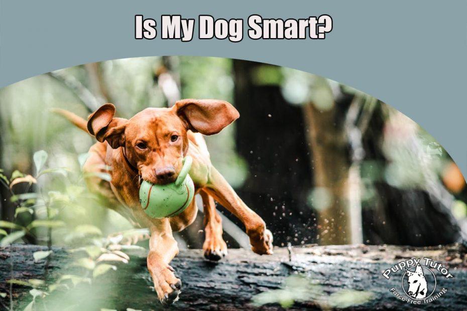Is my dog smart