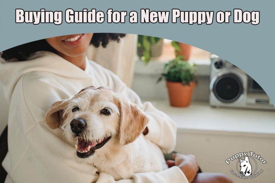 buying guide for puppy or dog
