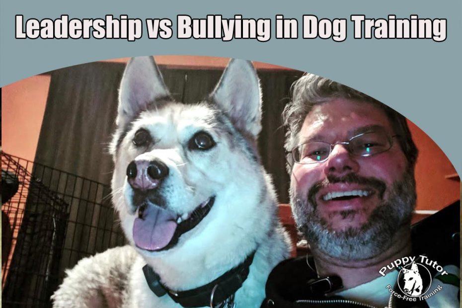 Leadership vs Bullying in Dog Training