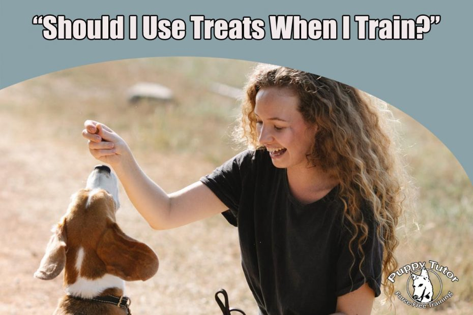 Should i use Treats when Dog Training
