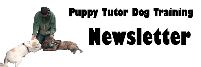 Puppy Tutor Dog Training Newsletter Header