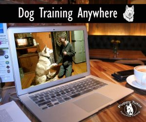 Online Dog Training Anywhere - Puppy Tutor Dog Training