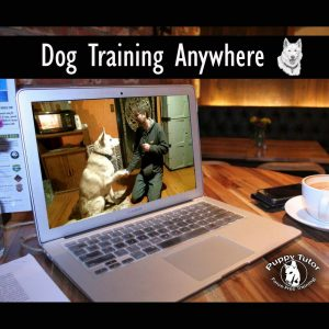 Online Dog Training - Puppy Tutor Dog Training