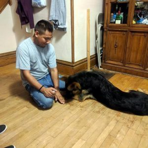 Private Dog Training Lessons - Puppy Tutor Dog Training