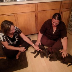 Complete Puppy Training Package