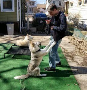 Dog Training with Lugh
