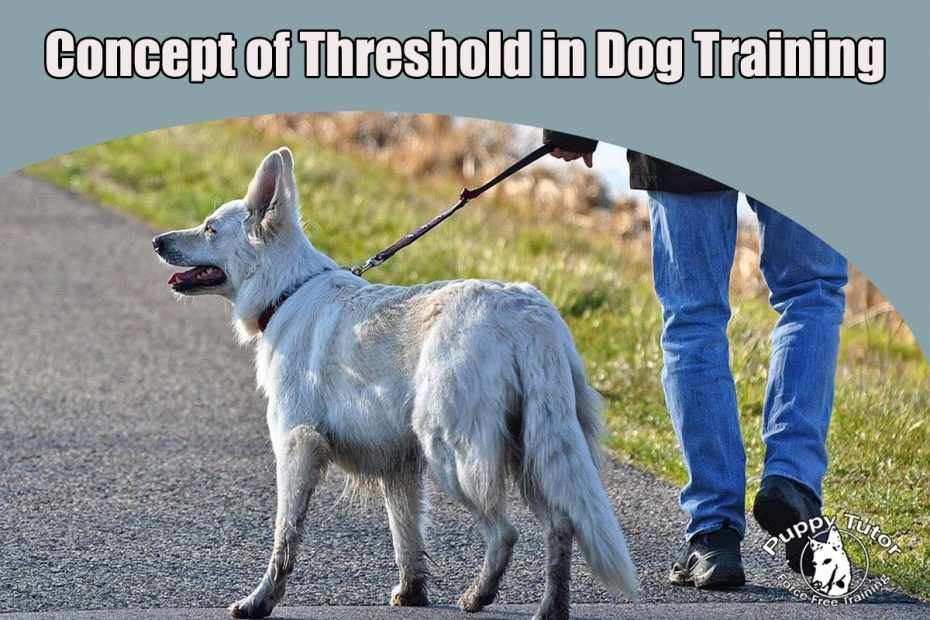 The Very Important Concept of Threshold in Dog Training