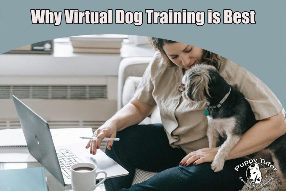 Why virtual dog training is best